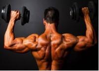 quanta massa muscolare si puo mettere in un mese